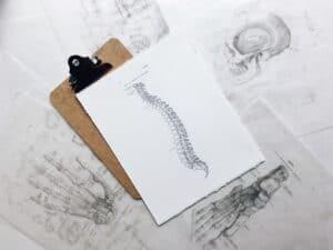 Dibujo columna vertebral