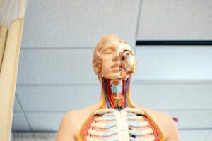El cuerpo humano y el enfisema pulmonar