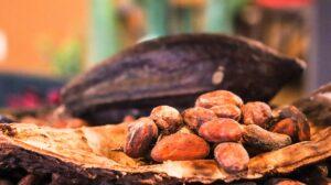 Semilla de cacao y chocolate