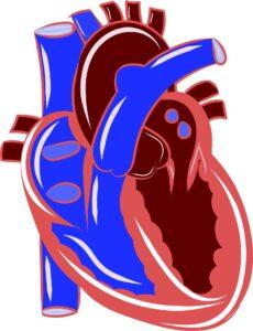 figura del corazón